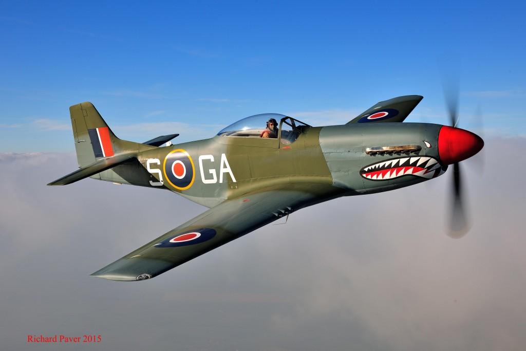 Shark Mustang January 2015